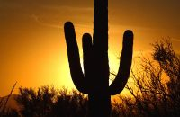 Un cactus con el atardecer de fondo