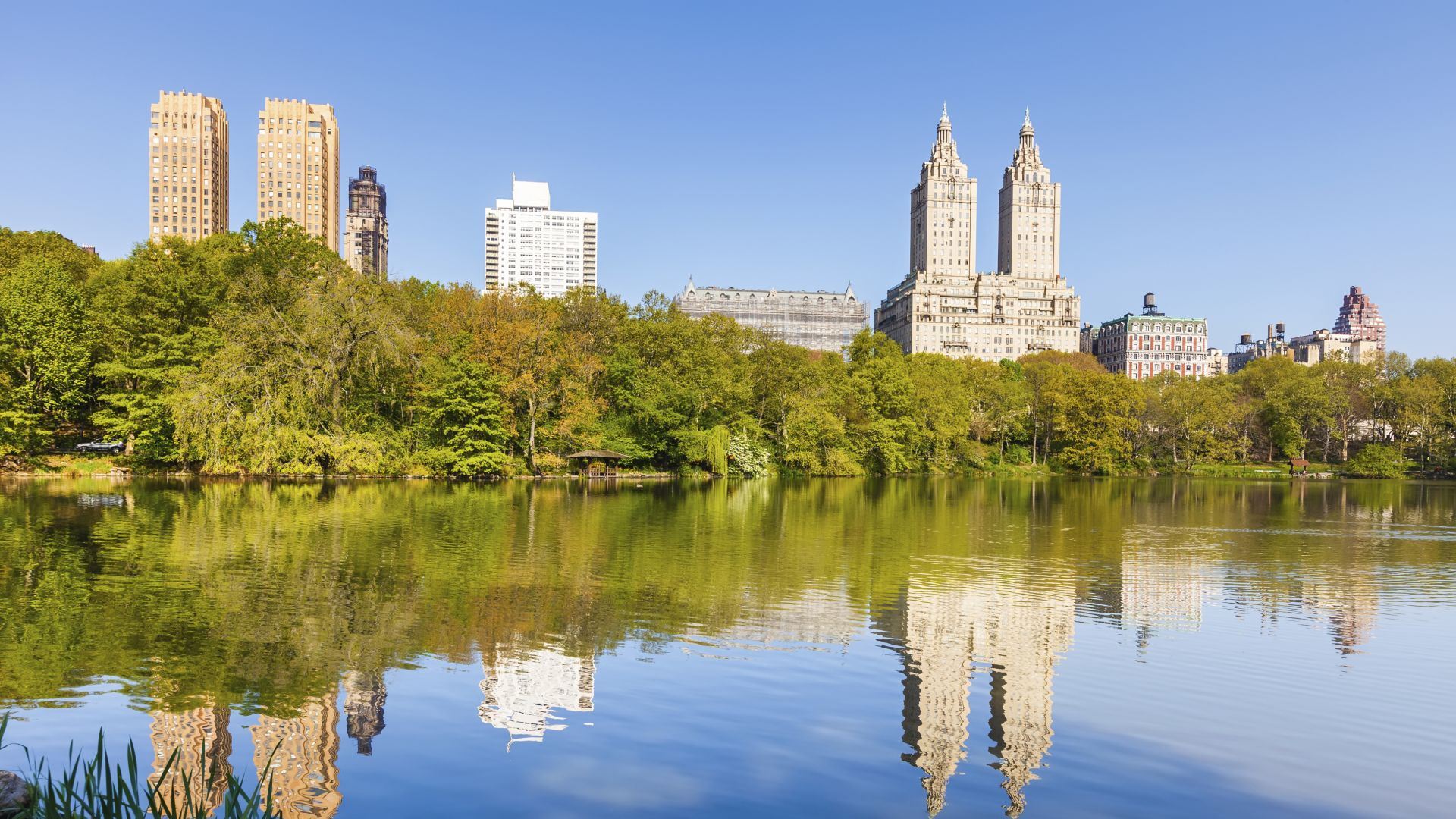 Central Park in Summer | Loews Regency New York Hotel