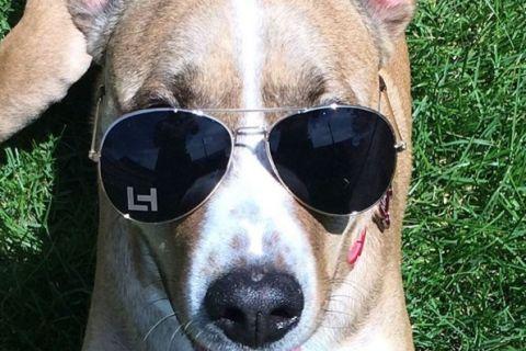 Un perro marrón y blanco que mira a la cámara