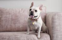 Un chien assis sur un sofa