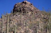 Primer plano de un cactus